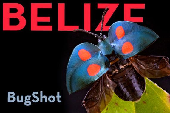 Bugshot