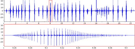 An oscillogram of the mandibular stridulation of C. cognatus; click here to listen to the sound.