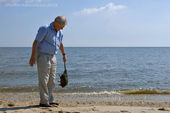 """Even Sir David Attenborough, the man who probably witnessed more natural spectacles than any other human being, is fascinated by the spawning of horseshoe crabs. Here he demonstrates the improper way of holding a horseshoe crab (never hold them by their telson) while on the beach in Delaware during the filming of the BBC series """"Life in the Undergrowth""""."""