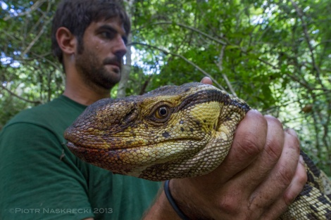 Harith Farooq holding a Rock monitor (Varanus albigularis). These enormous lizards are some of the largest reptilian predators of Gorongosa, surpassed only by fully grown rock pythons and crocodiles.