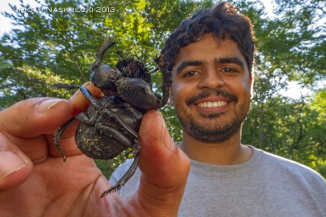 Bruno de Medeiros with one of the largest dung beetles found in Gorongosa, Pachylomerus femoralis.
