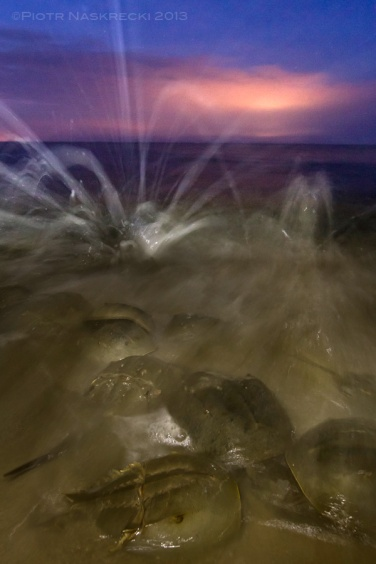 Once I used some fill-in light I was able to capture the true, dynamic character of the scene – waves crashing over the bodies of horseshoe crabs tumbling in the brown waters of the Delaware Bay.