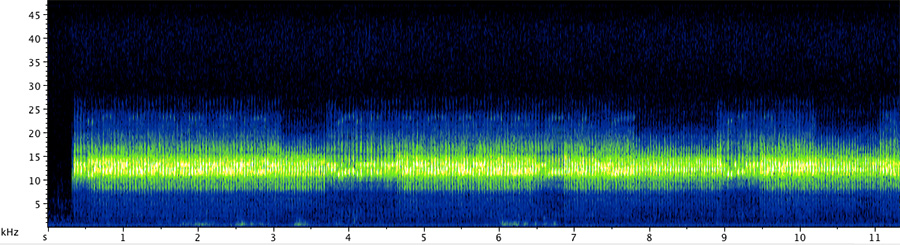 Two males of C. monstrosa calling. Click here to listen to the recording.