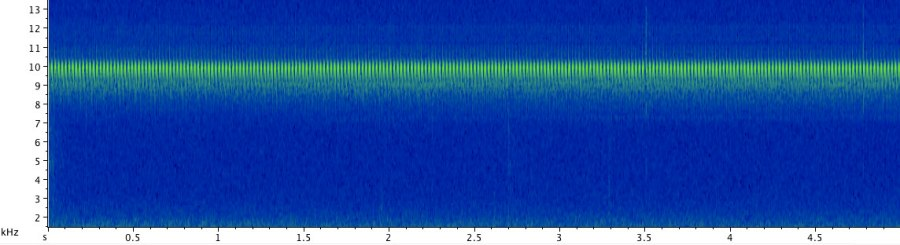 The call of the Sphagnum ground cricket is a soft, high-pitched trill, which is easy to miss unless your are looking for it. Click here to hear the recording of the call at the natural speed, followed by a fragment slowed down 5 times.