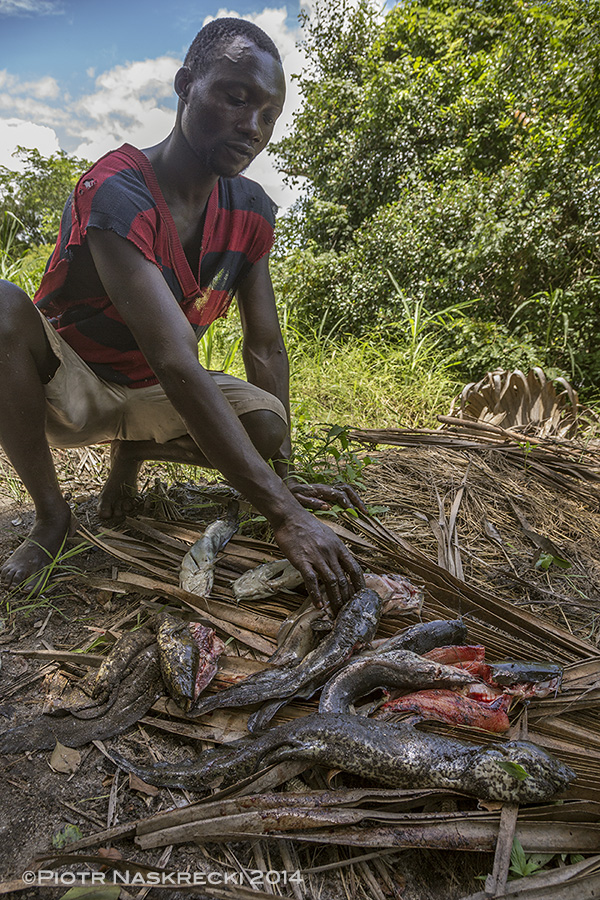 A fishermen from Dingue Dingue and his catch. The first animal is the African lungfish (Protopterus annectens).