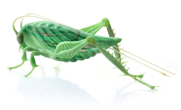 Glass_katydid2