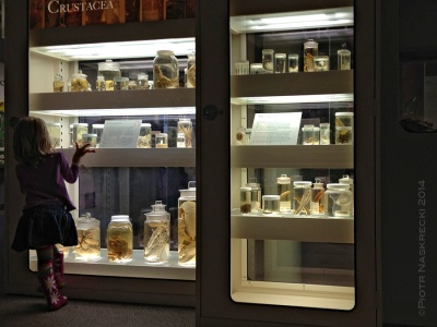 Museum collections are priceless not only because of their role in scientific discoveries, but for igniting the fascination with the natural world in future generations of researchers, artists, and conservationist.