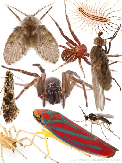 What do these beautiful animals have in common? You killed them. Or similar species. Our houses are death traps for countless organisms who are attracted to artificial lights and die inside. I found members of each of these species in the light fixtures of my house.