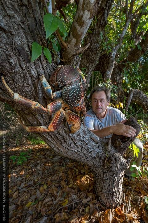 Mozambique Diary: Coconut crabs of Vamizi   The Smaller Majority ...